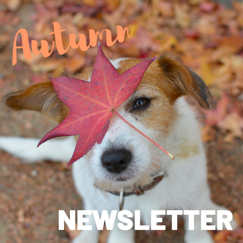 Engadine Vet Hospital Autumn Newsletter