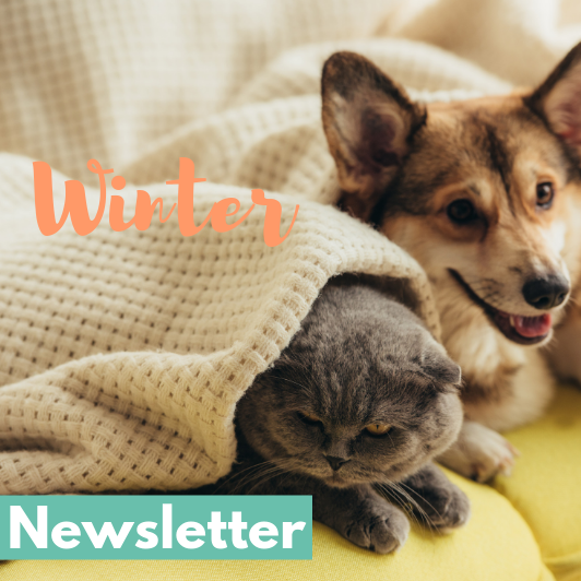 Engadine Vet Winter Newsletter